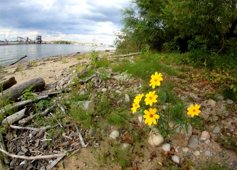 Ohio River on the Kentucky Shoreline near Cincinnati, Ohio