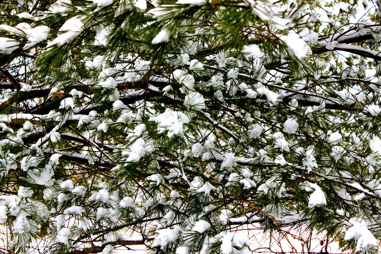 Nature's Snowballs