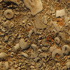 Fossils are found everywhere in Kentucky.  Here are just a few examples
