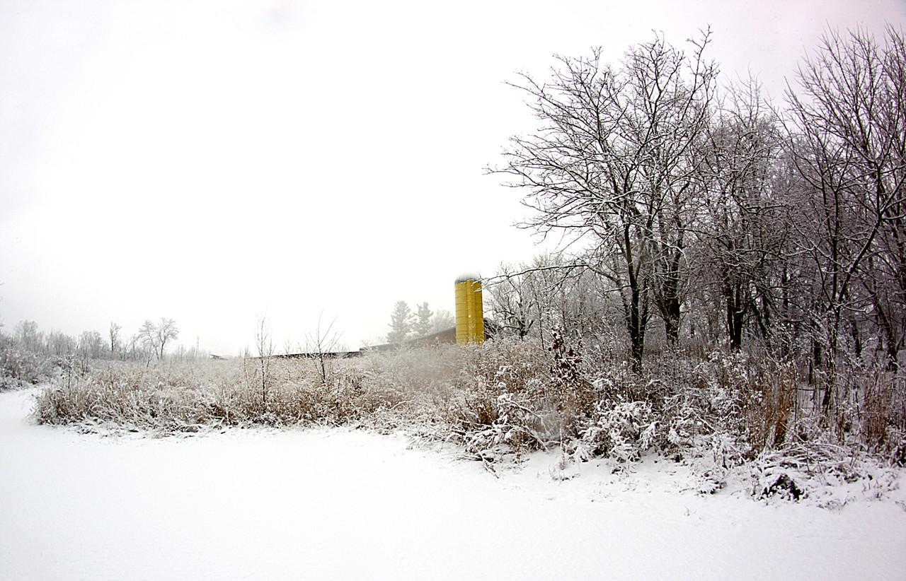 Snowy Woods