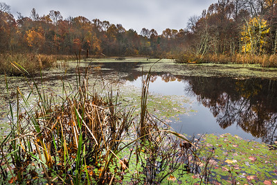 Sloan's Crossing Pond
