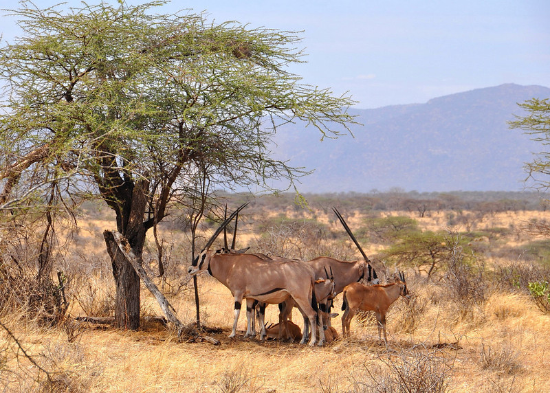 Samburu Game Reserve0001_241