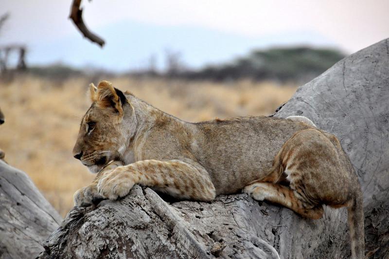 Samburu Game Reserve0001_63
