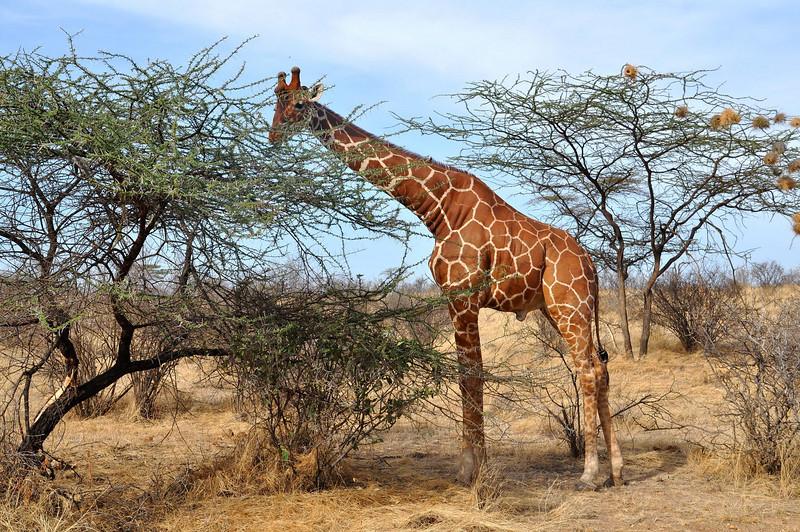 Samburu Game Reserve0001_223