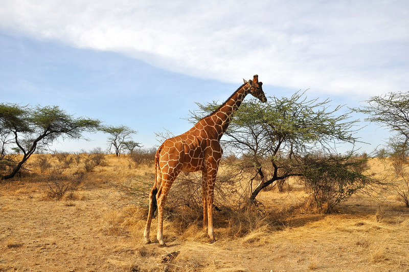 Samburu Game Reserve0001_220