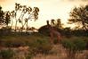 Samburu Game Reserve0001_262
