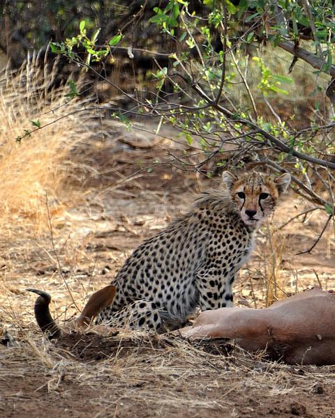 Samburu Game Reserve0001_205