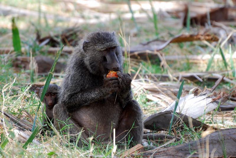 Samburu Game Reserve0001_294