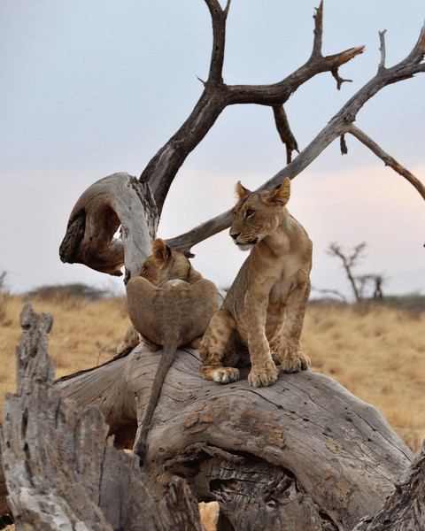 Samburu Game Reserve0001_57