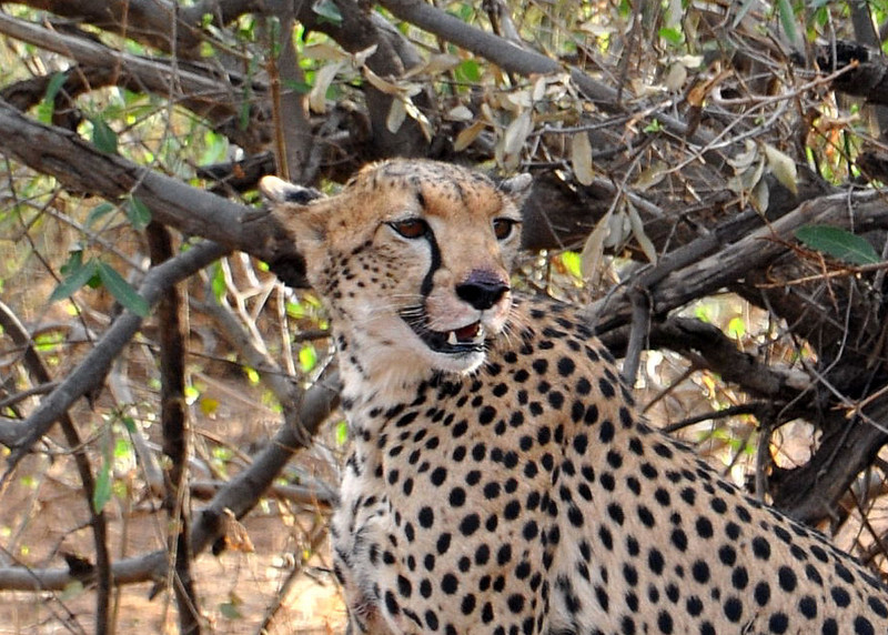 Samburu Game Reserve0001_200