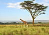 Lake Nakuru0001_29
