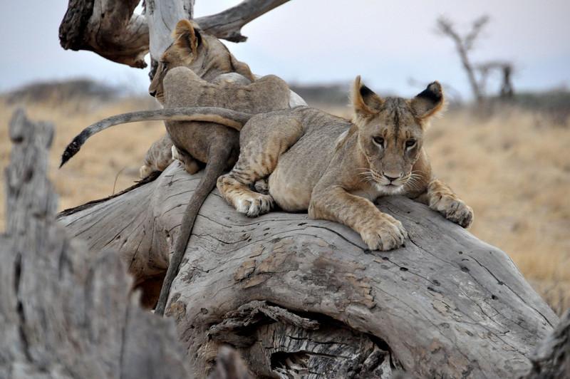 Samburu Game Reserve0001_60