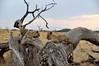 Samburu Game Reserve0001_62