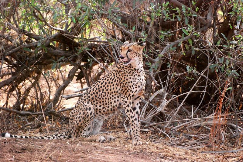 Samburu Game Reserve0001_327
