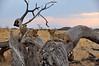 Samburu Game Reserve0001_65
