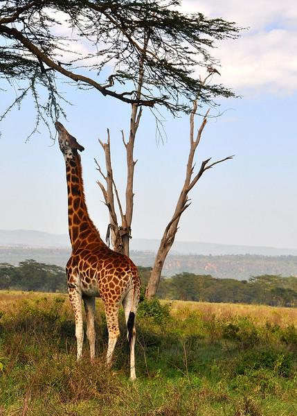 Lake Nakuru0001_30