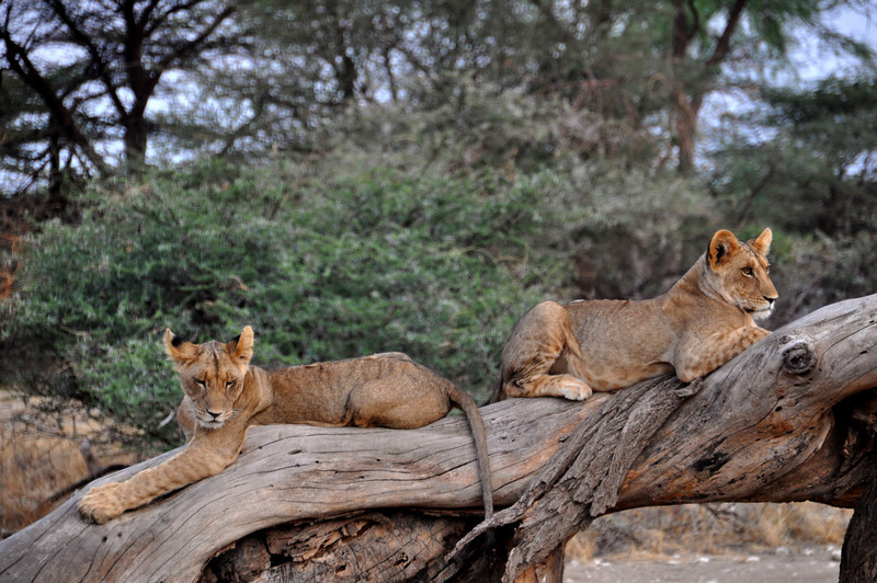 Samburu Game Reserve0001_48