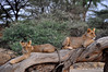 Samburu Game Reserve0001_48
