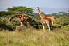 Lake Nakuru0001_25