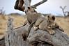 Samburu Game Reserve0001_61