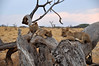 Samburu Game Reserve0001_66