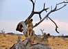 Samburu Game Reserve0001_74