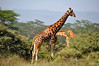 Warning...lots of giraffe photos ahead!