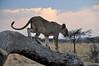 Samburu Game Reserve0001_68