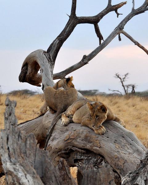 Samburu Game Reserve0001_67