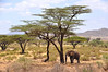 Samburu Game Reserve0001_190
