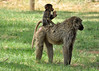 Samburu Game Reserve0001_255