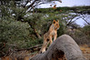 Samburu Game Reserve0001_49