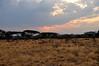 Samburu Game Reserve0001_84