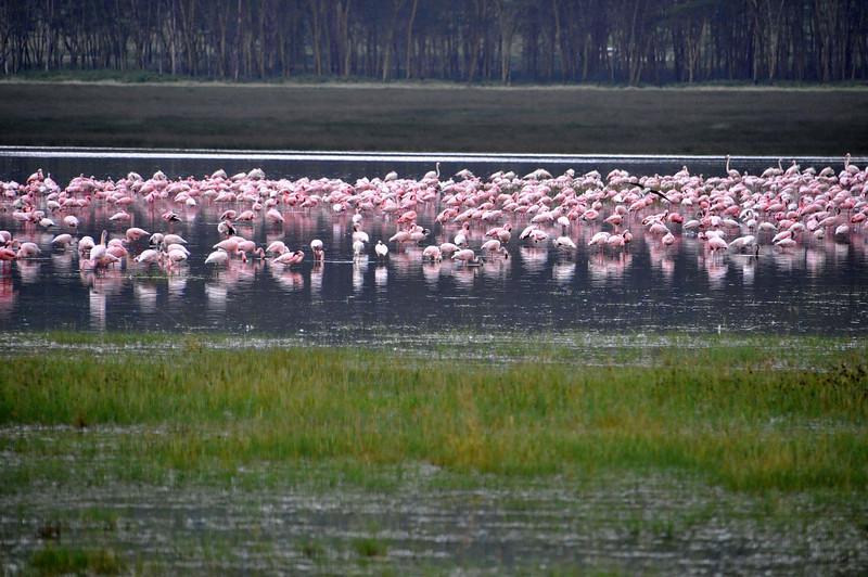Lake Nakuru0001_95