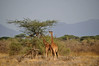 Samburu Game Reserve0001_40