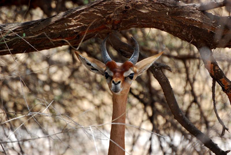Samburu Game Reserve0001_281