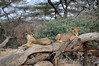 Samburu Game Reserve0001_43
