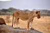Samburu Game Reserve0001_81