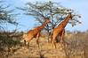 Samburu Game Reserve0001_225