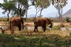 Samburu Game Reserve0001_272