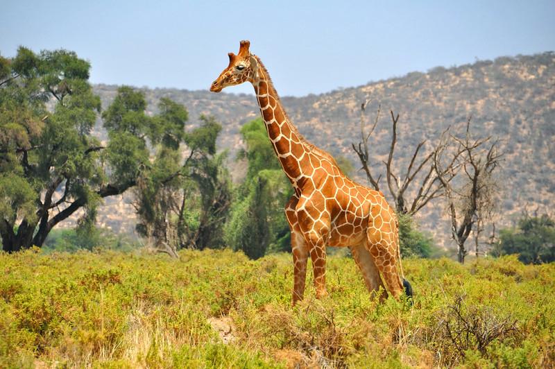 Samburu Game Reserve0001_183