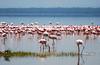 Lake Nakuru0001_106