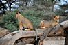 Samburu Game Reserve0001_51