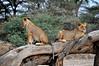 Samburu Game Reserve0001_51