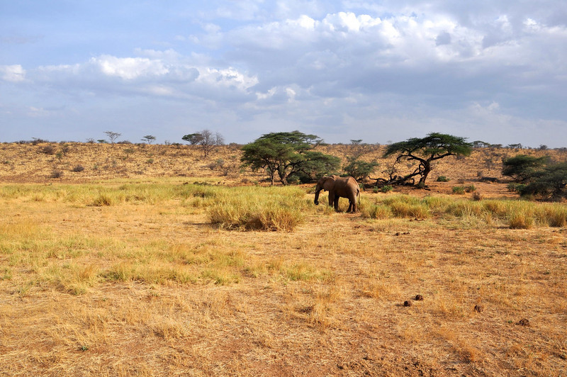 Elephant and trees.