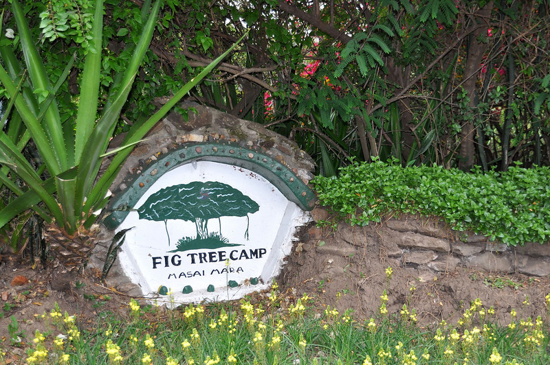 Our last camp was at the Fig Tree in the Masai Mara.