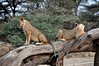 Samburu Game Reserve0001_50