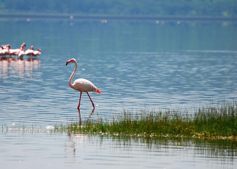 Lake Nakuru0001_111