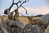 Samburu Game Reserve0001_56