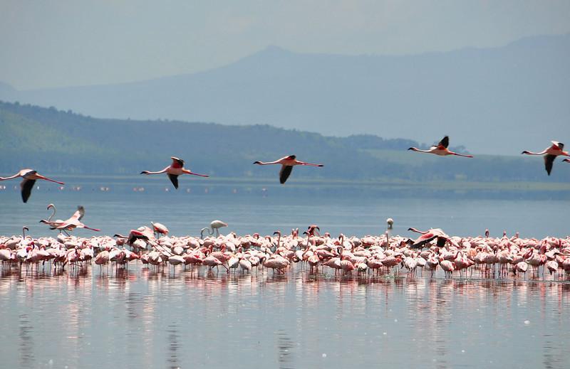 Lake Nakuru0001_67